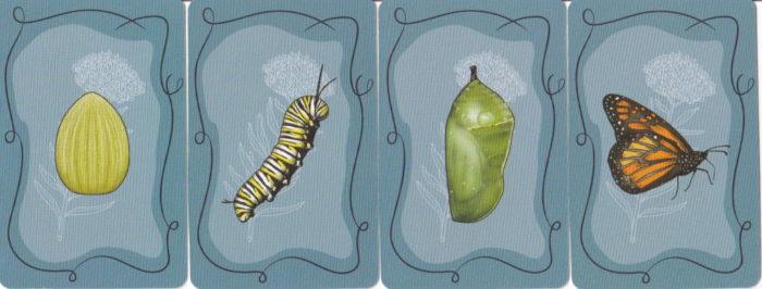 マリポーサス ライフサイクルカード